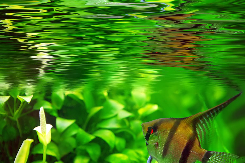 L'acquario biocenotico: l'acquariofilia consapevole