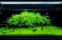 Aquascaping: il nuovo sentiero verde nell'acquariofilia