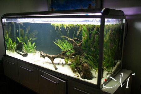 Biotopo amazzonico 2008 livia giovannoli for Acquario per tartarughe usato
