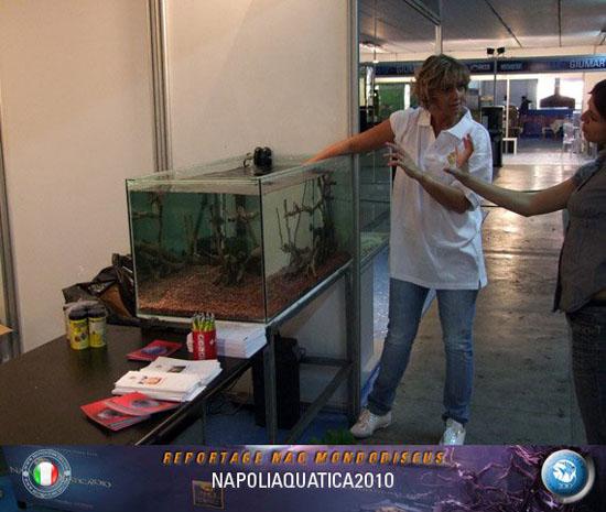 2010 sett-Napoliaquatica