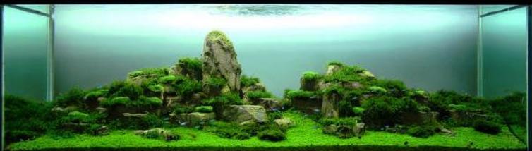 acquario-pasquale-buonpane-i-postoorienteeoccidente