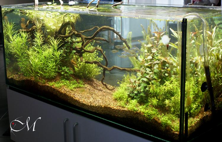 Galleria dei miei acquari livia giovannoli for Legni per acquario