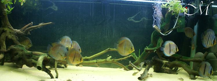 Acquario per Heckel discus 2007