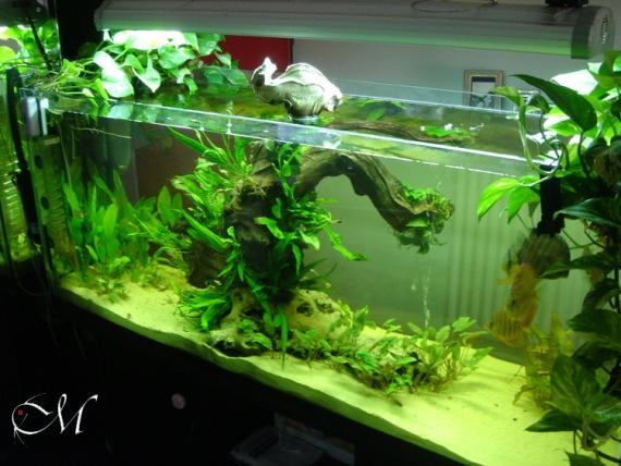 Primo acquario wild